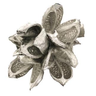 EXOTISCHE TROCKENBLUME SOROROCA Head Strelitzie Blume getrocknet silber Deko-Blume silber